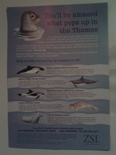 A ZSL poster showing the species to look our for in the Thames