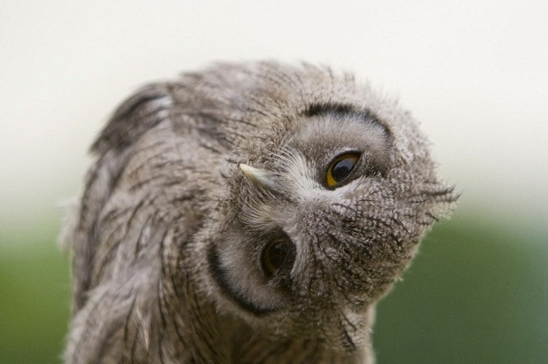 In A Flap: Soho's Owl Bar Loses Cocktails And Charity Amid Welfare Concerns