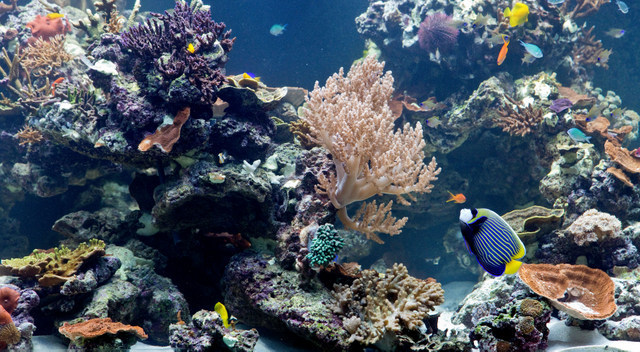 This small aquarium of a coral reef is the only living display in the exhibition. © NHM, London