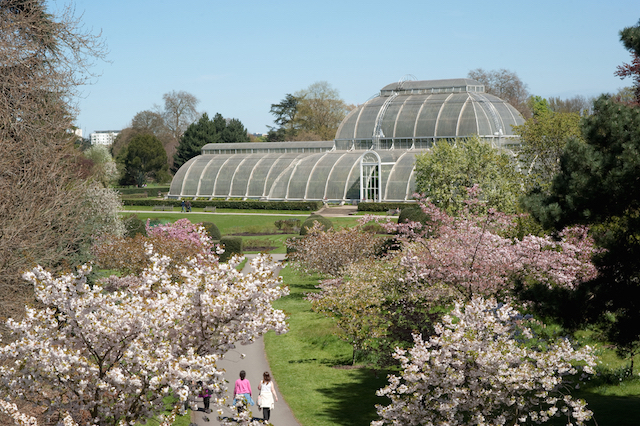 Cherry Tree Walk and the Palm House