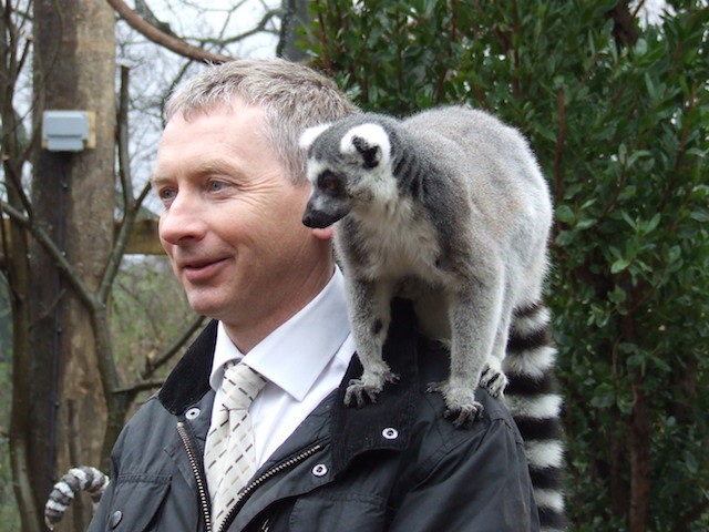 A lemur takes a shine to ZSL Curator of Mammals Malcolm Fitzpatrick (visitors aren't allowed to touch the lemurs).
