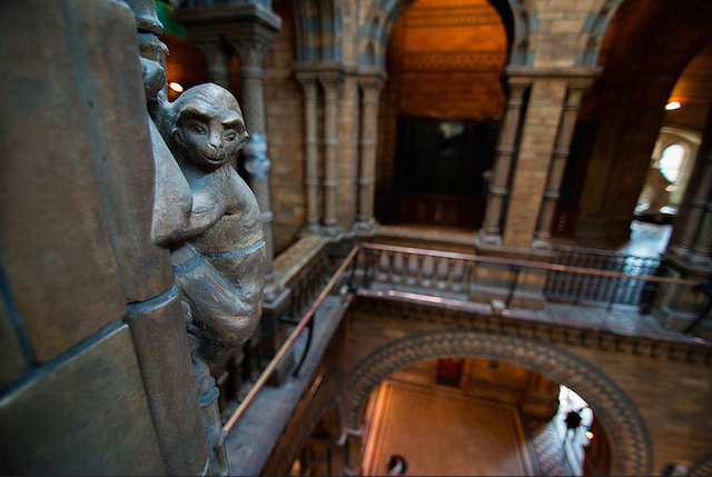 There are 78 monkeys climbing the arches at the Natural History Museum. Photo: John Willoughy (2014)
