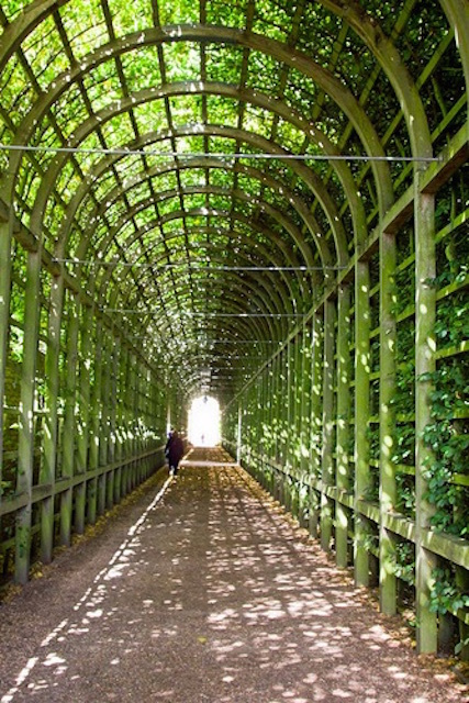 Hampton Court hedge tunnel. Photo: reiver iron (2012)