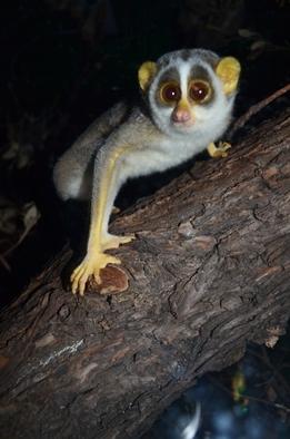 Resultado de imagen de animals at night images