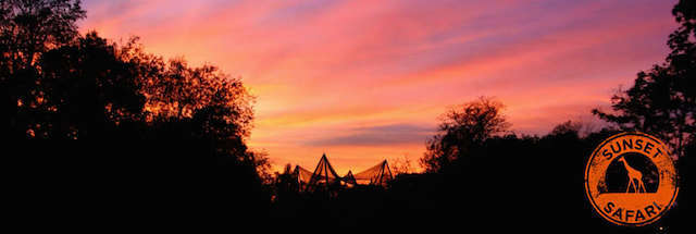 London Zoo Sunsets