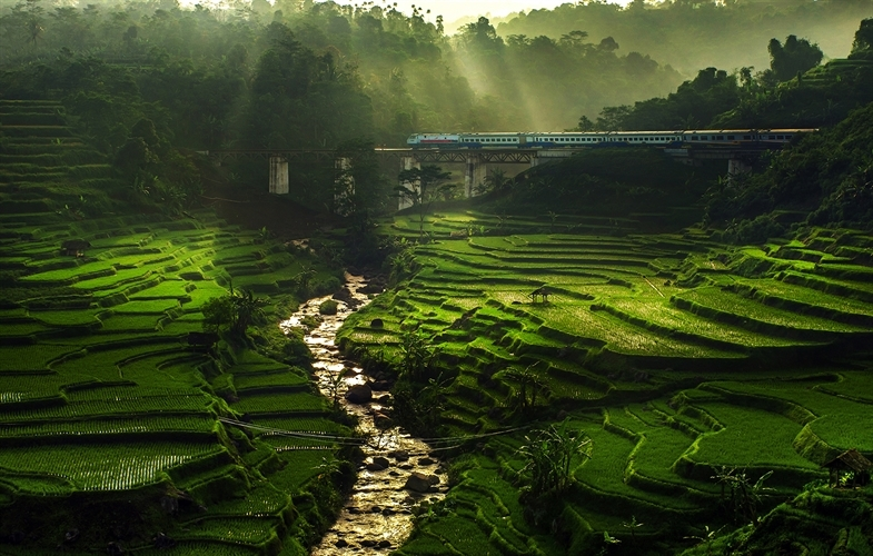 Rice fields and a train lit by the sun's rays. Copyright Ismail Abdul Mutalib.