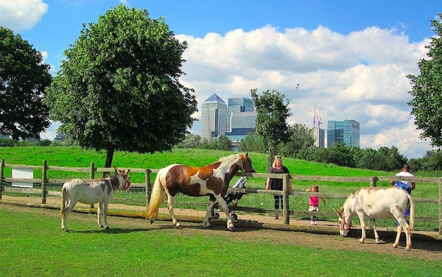 Horses and donkeys at Mudchute Farm on the Isle of Dogs, with Canary Wharf in the background. Photo: Andy Worthington (2012)