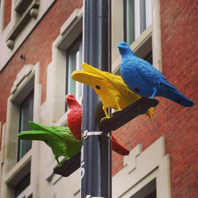 Soho Square's vibrant pigeons
