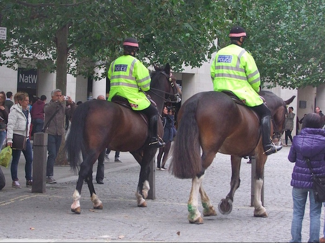 Police horses near St Paul's Cathedral. Photo: Ken (2012)