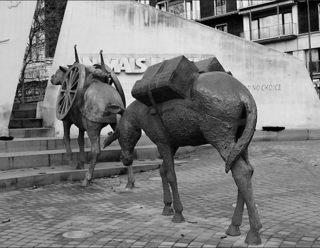 Beast of Burden, a war memorial for animals used in battle, in Hyde Park. Photo: Robert Moore (2009)