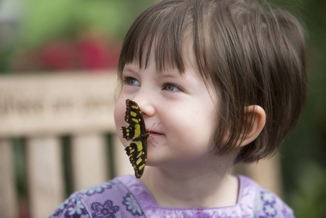 Clearly children's faces are particularly appealing to butterflies.