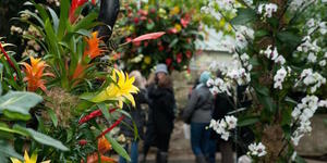 Win Tickets For Kew Gardens Spicy Summer Lates