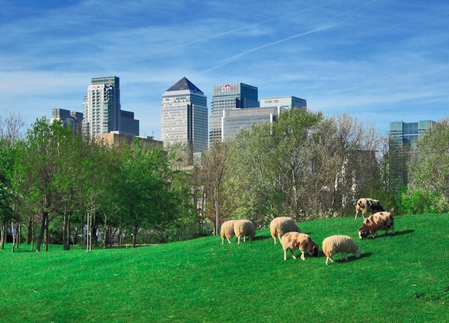 Mudchute City Farm with Canary Wharf in the background. Photo: Anna J (2011)