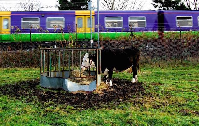 Kentish Town City Farm. Photo: Geoff Holland (2008)