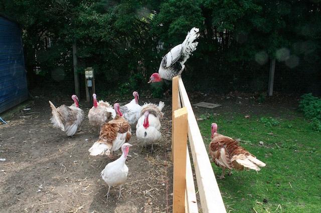 Brooks Farm in Leyton. Photo: IanVisits (2011)