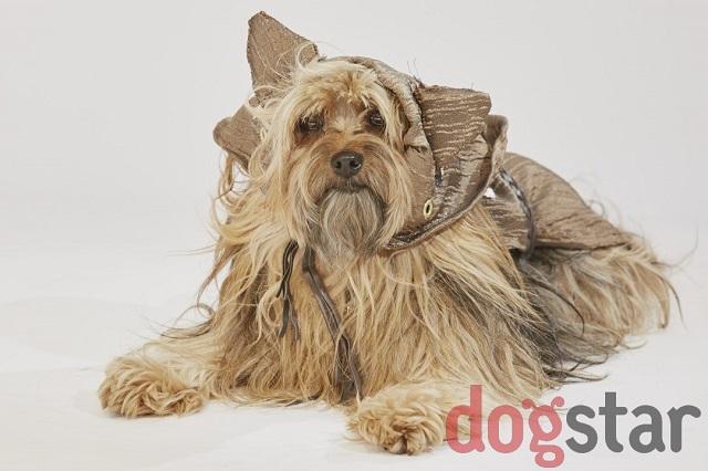 Is Wan A Dog S Bark