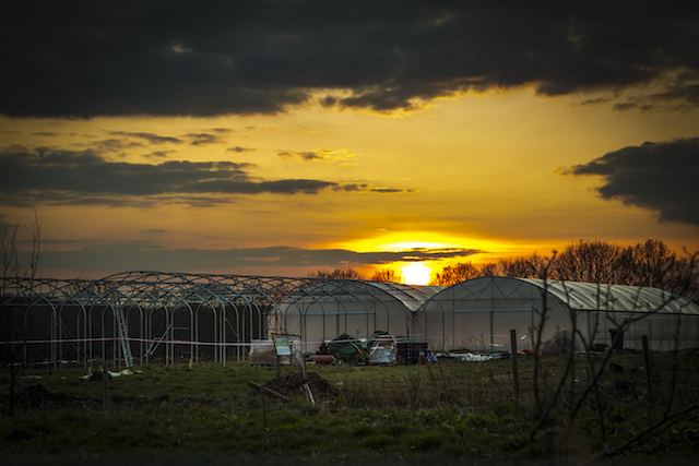 The farm at sunset