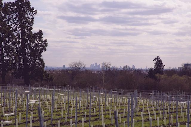 Community vineyard