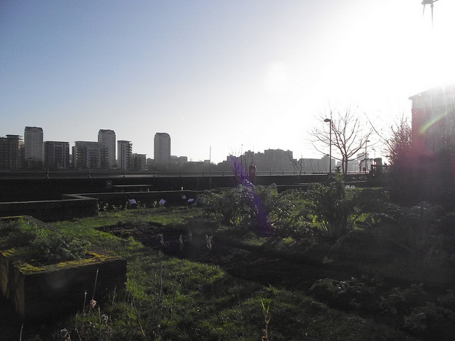 Fantastic views at Surrey Docks City Farm