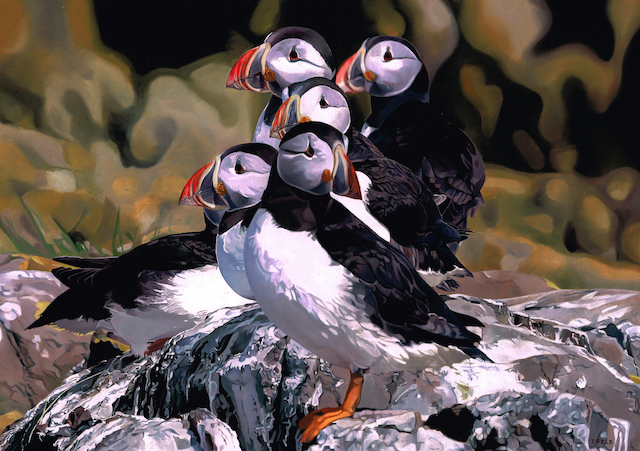 Puffins by Tony Feld
