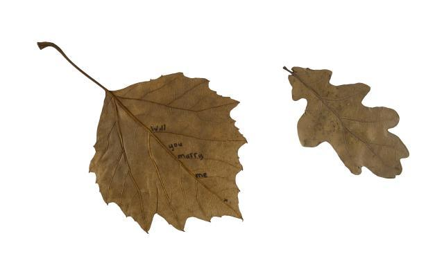 """Two leaves that have travelled from a tree to the ground. Yet if I was to say the small leaf is from the grounds of Auschwitz and you connect how the soil contains the ash of the crematorium that operated there -- its journey is poignantly different. And if the larger leaf has the words 'will you marry me' written on the reverse -- part of a marriage proposal in Hackney Downs Park -- again its journey changes. So now we have four journeys, two of them testaments to human lives, two of them a tree shedding its leaves."" Sam Winston"