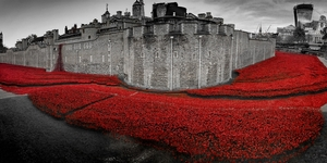 London News Roundup: Tower Poppies Take Nationwide Tour