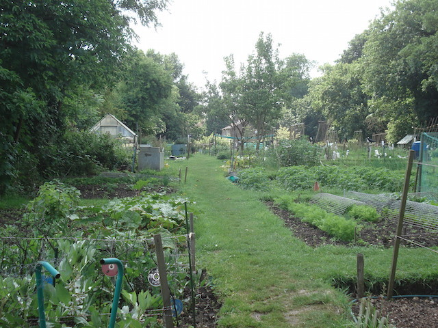 LB Sutton, Cheam allotment, c.2012 (Sutton Council)