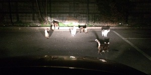 The Car Park Cats Of Peckham