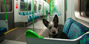 Which Animals Can You Take On The Tube?