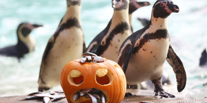 Family Things To Do In London For Halloween