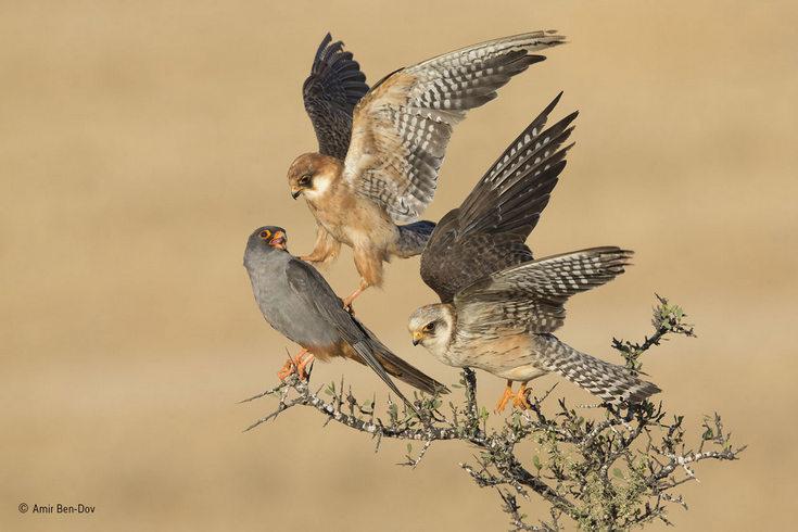 amir-ben-dov-_birds.jpg