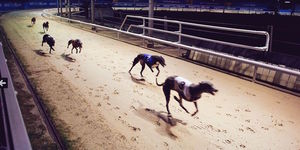 Deal Of The Day: Love The Dogs At Wimbledon Greyhound Stadium