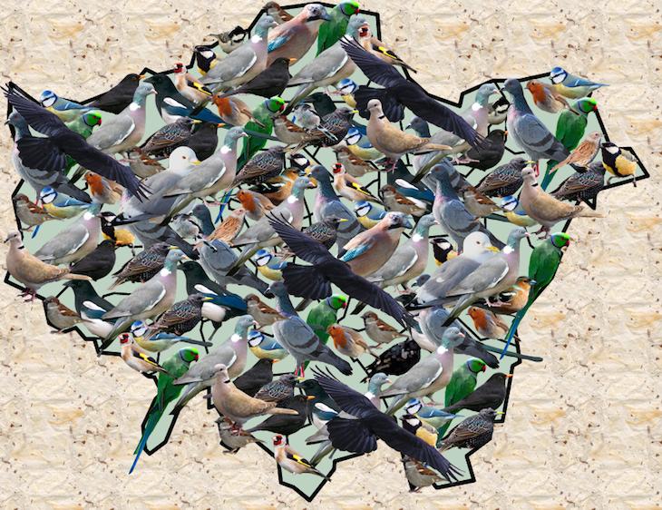 The Commonest Birds In London