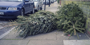 You Can Still Recycle Your Christmas Tree
