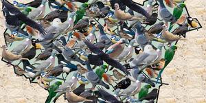 Get Counting In The Big Garden Birdwatch 2016