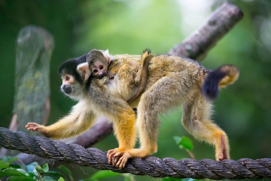 monkeymumandbaby_875.jpg