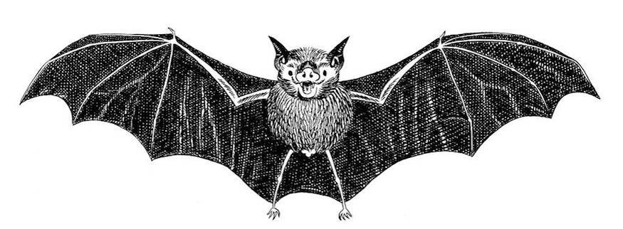 Get Stuck Into British Science Week With Bats And Robots