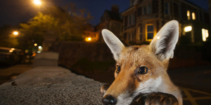 Superb Wildlife Photography Returns To London