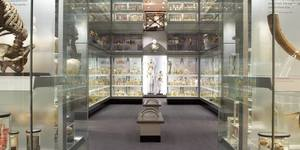 The Hunterian Museum Is Closing For 3 Years