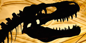 Go On A Dinosaur Hunt In London