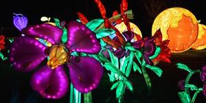 Ticket Alert: Chiswick Magical Lantern Festival Returns For 2017