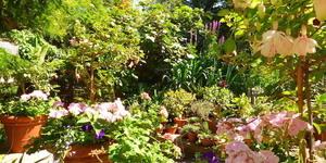 London's Best Museum Gardens