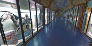You Can Now Explore The Natural History Museum On Google Street View