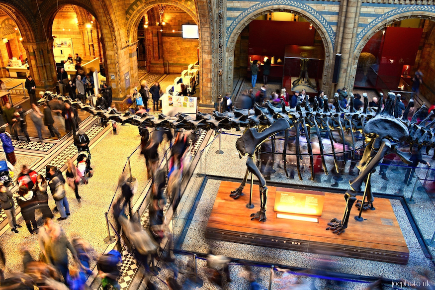 Bid a final farewell to Dippy at the Natural History Museum's New Year's Eve Ball
