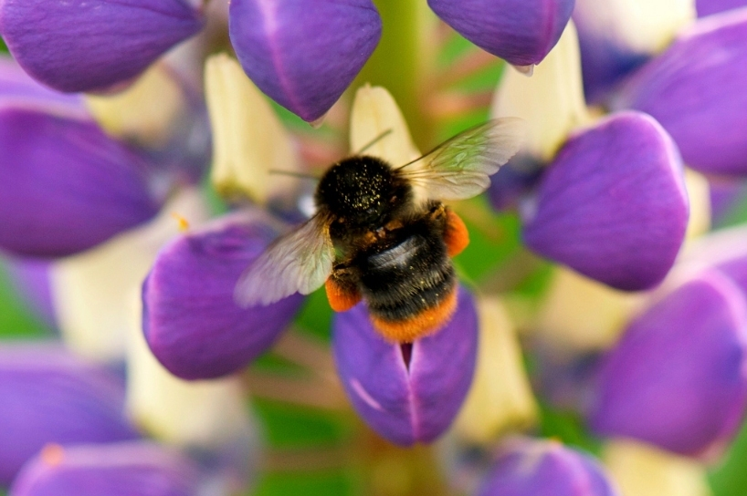 London News Roundup: London Honeybees Giving Asian Hornets A Run For Their Money
