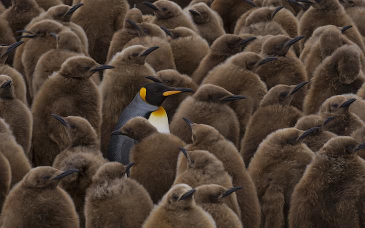 Stunning photos of animals around the world go on display at London Zoo