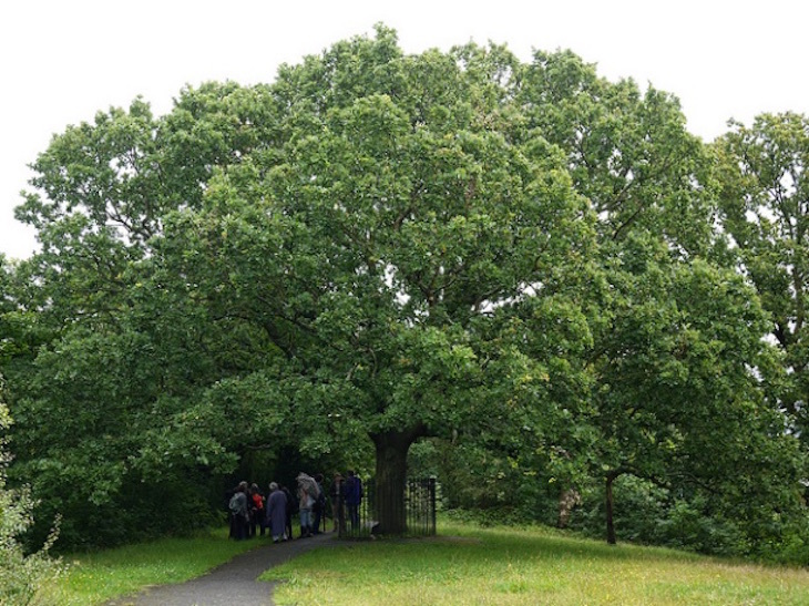 Why Are So Many Stations Named After Oak Trees?