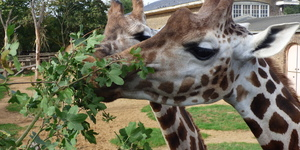 What's It Like Being A Zookeeper At London Zoo?