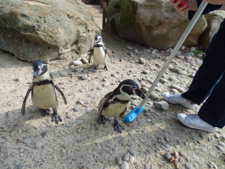 Fancy being a zookeeper at London Zoo? This is what it's like