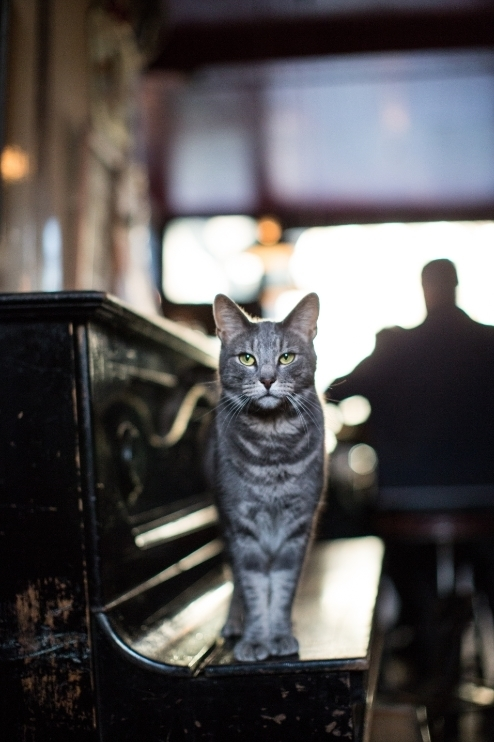 Meet The Pub Cats Of London
